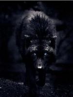 Black Wolf The Insane
