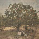 Andrew Appletree
