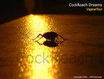 Cockroach Dreams
