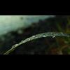 Simplicity video