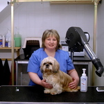 Corby Dog Grooming