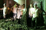 Pinebox Rhythm Revue