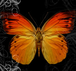 The Butterfly Theory